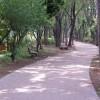 遊歩道,自転車