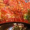 京都,紅葉狩り,名所